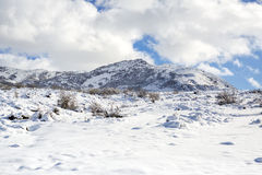 Ίχνη ζώων και σκιών στο χιόνι στριφνά ίχνη άγριου ζώου στο χιόνι Τα ίχνη στο χιόνι αφήνονται όχι από το πρόσωπο Στοκ Εικόνες