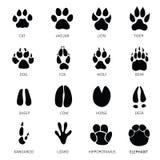 Ίχνη ζώων Στοκ Εικόνες