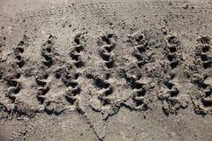 Ίχνη διαδρομών του Caterpillar στο έδαφος Στοκ Εικόνα