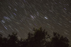 Ίχνη και δέντρα αστεριών Στοκ Φωτογραφία