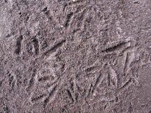Ίχνη κοτόπουλου στο έδαφος στοκ φωτογραφία