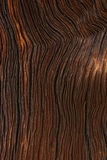 Ίχνη μιας πυρκαγιάς σε ένα παλαιό πεύκο, κάθετο υπόβαθρο Στοκ Εικόνες