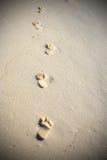 ίχνη παραλιών αμμώδη Στοκ εικόνες με δικαίωμα ελεύθερης χρήσης