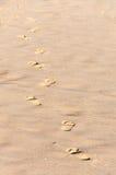 ίχνη παραλιών αμμώδη Στοκ Εικόνες