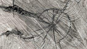Ίχνη περικοπών σε έναν κορμό στοκ φωτογραφίες