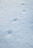 Ίχνη πουλιών στο χιόνι Στοκ Φωτογραφία