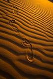 Ίχνη στην άμμο ερήμων Στοκ φωτογραφίες με δικαίωμα ελεύθερης χρήσης