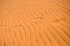 Ίχνη στην άμμο ερήμων Στοκ εικόνες με δικαίωμα ελεύθερης χρήσης
