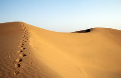 Ίχνη στην έρημο Στοκ φωτογραφία με δικαίωμα ελεύθερης χρήσης