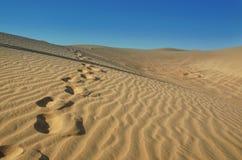 Ίχνη στην έρημο Στοκ εικόνες με δικαίωμα ελεύθερης χρήσης