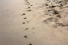 Ίχνη στην αμμώδη παραλία στην παραλία Μαύρης Θάλασσας σε Obzor, Βουλγαρία Στοκ Εικόνα