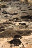 Ίχνη στη λάσπη λάβας στοκ φωτογραφίες με δικαίωμα ελεύθερης χρήσης