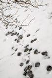 Ίχνη στους κλάδους χιονιού και δέντρων Στοκ εικόνα με δικαίωμα ελεύθερης χρήσης