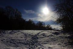 Ίχνη στο χιονώδες δάσος το χειμώνα Τα ζώα άφησαν τα ίχνη στο χιονώδες δάσος το χειμώνα στοκ φωτογραφία