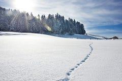 Ίχνη στο χιονώδη λόφο στοκ φωτογραφία με δικαίωμα ελεύθερης χρήσης