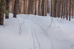 Ίχνη στο χιόνι Στα ξύλινα ίχνη στο χιόνι του σκιέρ Στοκ Εικόνες