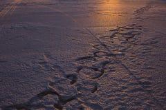 Ίχνη στο χιόνι στοκ εικόνα με δικαίωμα ελεύθερης χρήσης