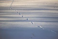 Ίχνη στο χιόνι Στοκ φωτογραφία με δικαίωμα ελεύθερης χρήσης