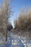 Ίχνη του αυτοκινήτου στο χειμερινό δάσος Στοκ φωτογραφία με δικαίωμα ελεύθερης χρήσης