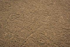 Ίχνη υποβάθρου μικρών καβουριών στην παραλία Στοκ φωτογραφία με δικαίωμα ελεύθερης χρήσης