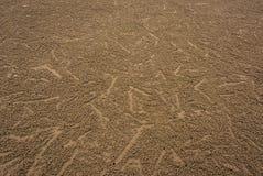 Ίχνη υποβάθρου μικρών καβουριών στην παραλία Στοκ Εικόνα