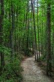 Ίχνη φύσης στην ένωση του εθνικού πάρκου βράχου, NC στοκ εικόνες