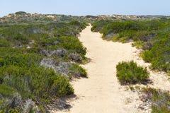 Ίχνος, άμμος και βλάστηση σε Arrifana Στοκ Εικόνες