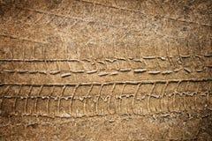 ίχνος άμμου Στοκ Φωτογραφίες