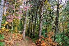 Ίχνος βουνών πεζοπορίας, Giuguno, Ιταλία Στοκ φωτογραφία με δικαίωμα ελεύθερης χρήσης