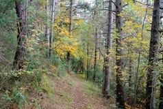Ίχνος βουνών πεζοπορίας, Giuguno, Ιταλία Στοκ εικόνες με δικαίωμα ελεύθερης χρήσης