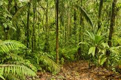 Ίχνος ζουγκλών, Κόστα Ρίκα Στοκ Φωτογραφίες