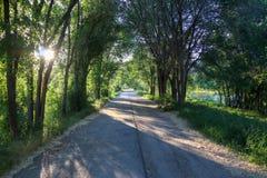 Ίχνος κάτω από τα δέντρα Στοκ φωτογραφίες με δικαίωμα ελεύθερης χρήσης