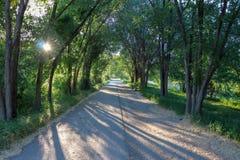 Ίχνος κάτω από τα δέντρα Στοκ εικόνες με δικαίωμα ελεύθερης χρήσης