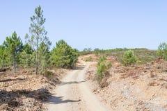 Ίχνος και δέντρα σε Arrifana Στοκ Φωτογραφίες