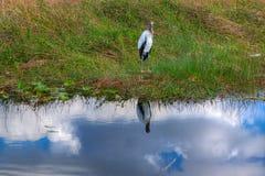 Ίχνος ΛΦ-Everglades εθνικό πάρκο-Anhinga Στοκ εικόνες με δικαίωμα ελεύθερης χρήσης
