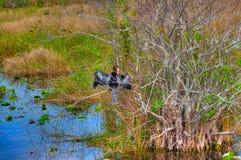 Ίχνος ΛΦ-Everglades εθνικό πάρκο-Anhinga Στοκ Φωτογραφίες