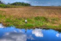 Ίχνος ΛΦ-Everglades εθνικό πάρκο-Anhinga Στοκ εικόνα με δικαίωμα ελεύθερης χρήσης