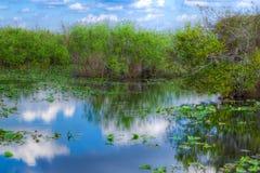 Ίχνος ΛΦ-Everglades εθνικό πάρκο-Anhinga Στοκ Εικόνα