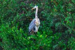 Ίχνος ΛΦ-Everglades εθνικό πάρκο-Anhinga Στοκ φωτογραφίες με δικαίωμα ελεύθερης χρήσης