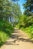 Ίχνος μέσα στο δάσος στο κρατικό πάρκο Ουάσιγκτον ΗΠΑ απογοήτευσης ακρωτηρίων Στοκ Εικόνες
