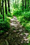 Ίχνος μέσω του δάσους Στοκ Εικόνες