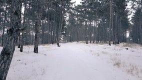 Ίχνος μέσω του μυστήριου σκοτεινού δάσους το χειμώνα απόθεμα βίντεο