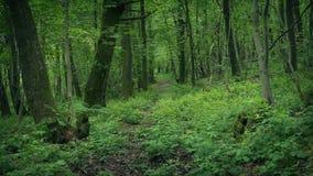 Ίχνος μέσω των φυσικών ξύλων φιλμ μικρού μήκους