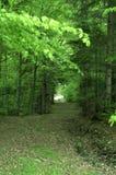 Ίχνος μεταξύ των δέντρων στοκ φωτογραφία με δικαίωμα ελεύθερης χρήσης