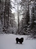 Ίχνος Μινεσότα περπατήματος σκυλιών στοκ φωτογραφίες