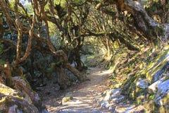 Ίχνος οδοιπορίας Annapurna σε ένα παλαιό μεγάλο δάσος δέντρων, Νεπάλ Στοκ εικόνα με δικαίωμα ελεύθερης χρήσης