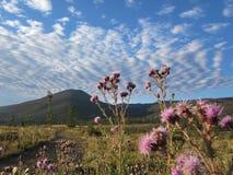 Ίχνος πεζοπορίας βουνών Στοκ εικόνες με δικαίωμα ελεύθερης χρήσης