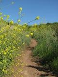 Ίχνος πεζοπορίας μέσω ενός φρέσκου τομέα άνοιξη που γεμίζουν με τα χρυσά wildflowers Στοκ Φωτογραφίες
