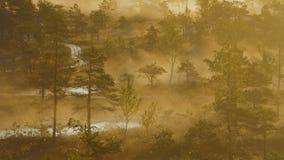 Ίχνος πεζοπορίας που τρέχει μέσω ενός δάσους υγρότοπου με την υδρονέφωση που αυξάνεται από τις λίμνες απόθεμα βίντεο