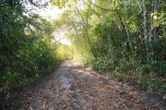 Ίχνος πεζοπορίας στη ζούγκλα κοντά στο SAN Ηγνάτιος, Μπελίζ Στοκ φωτογραφία με δικαίωμα ελεύθερης χρήσης